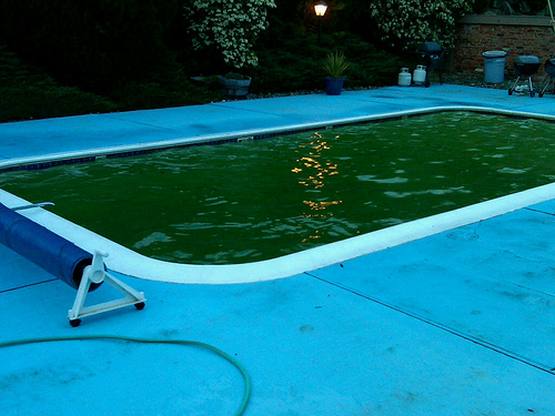 Green Pool Scottsdale