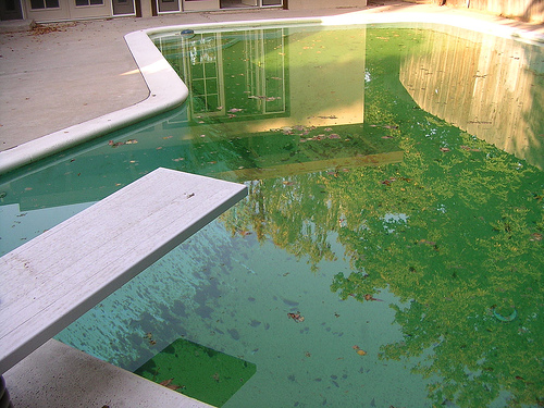Green pools in scottsdale have 4 cleaning reasons best - Concrete swimming pools vs fiberglass ...